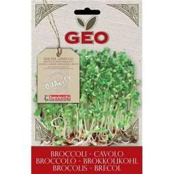 Nasiona do kiełkowania - Brokuł BIO 13 g